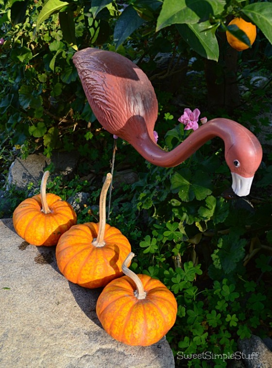 Pink Flamingo and pumpkins by SweetSimpleStuff